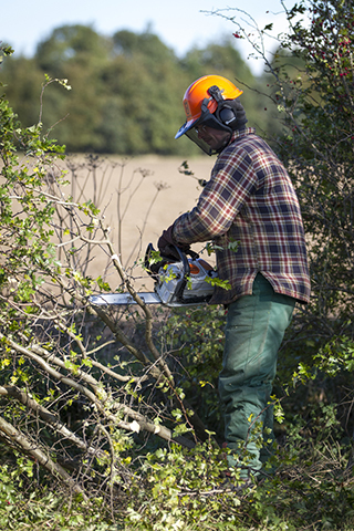 Chainsaw and Forestry